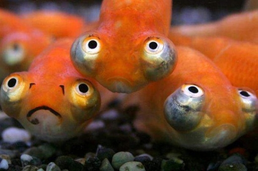 Stupid fish face funny pictures cats funny pics for Big nose fish