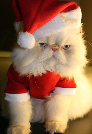 Unhappy Santa Claws
