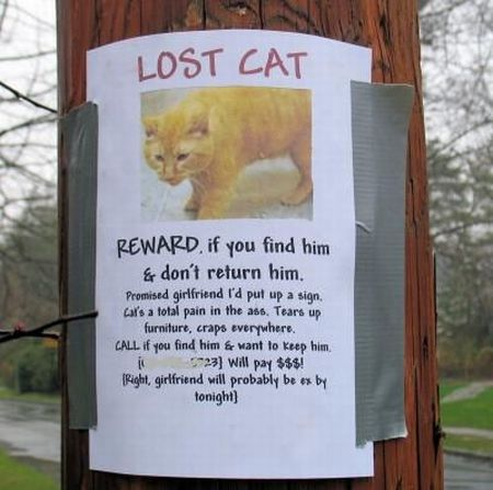 Can cats find their way home if lost