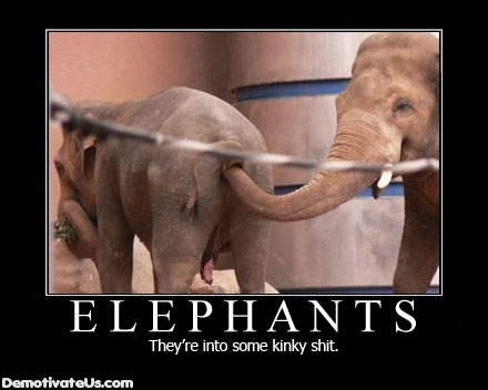Elephants Are Crazy Stuff