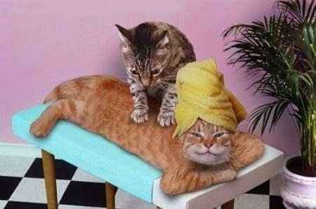 relaxing massage funny animals funny cats funny dogs funny pets